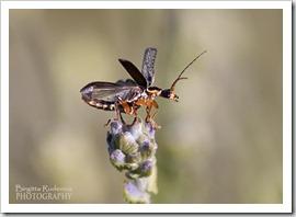 Bugs 4 you