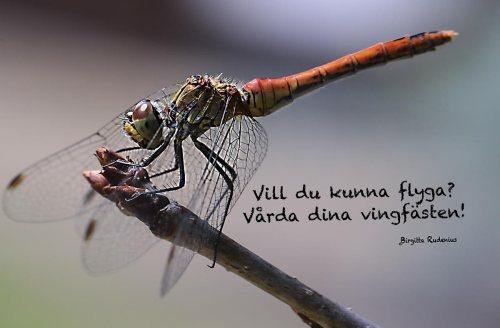 Vill du kunna flyga? - Vårda dina vingfästen! @BirgittaRudenius